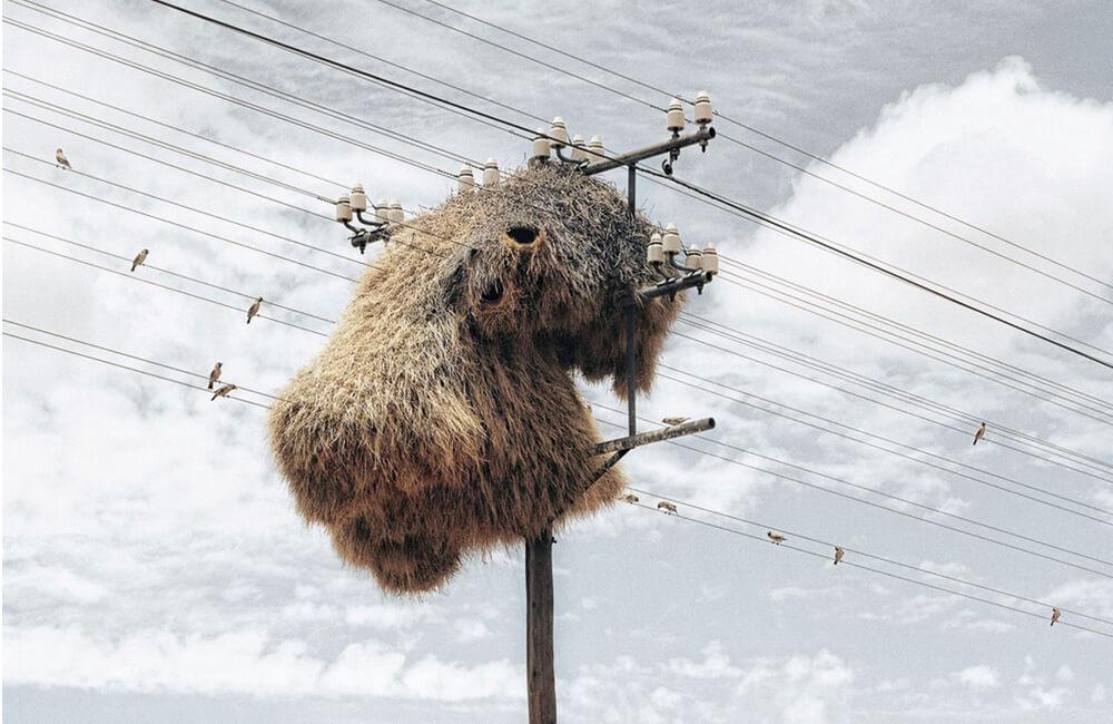 Birds Nest @Rachael Ishaya / Pinterest.com