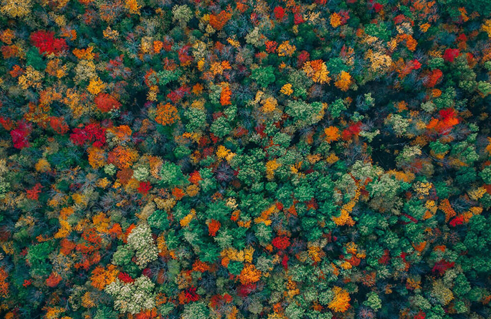 Fall Leaves @dronestagram / Instagram.com
