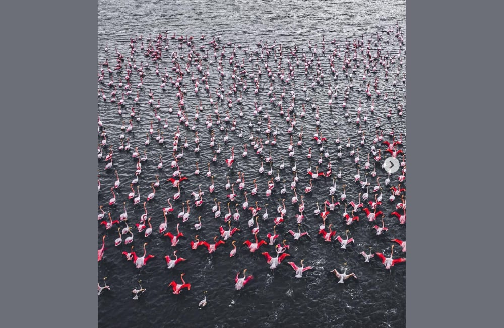 Flamingos @Technology and Digital / Pinterest.com
