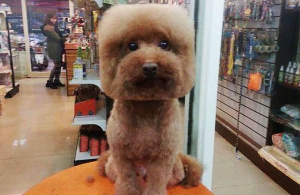 Dog Grooming @japantrendsinc / Twitter.com
