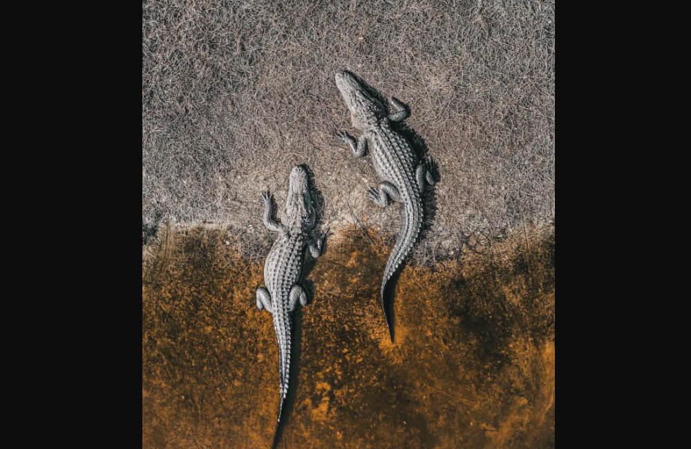 Crocodiles @abstractaerialart / Instagram.com