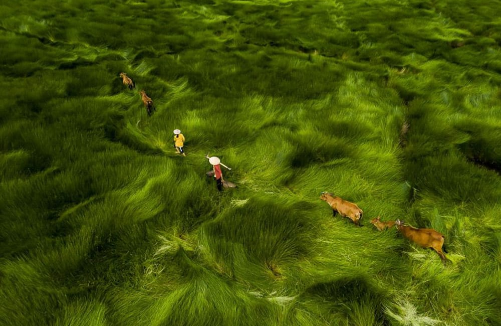 Cross The Field © nubbsgalore / tumblr.com