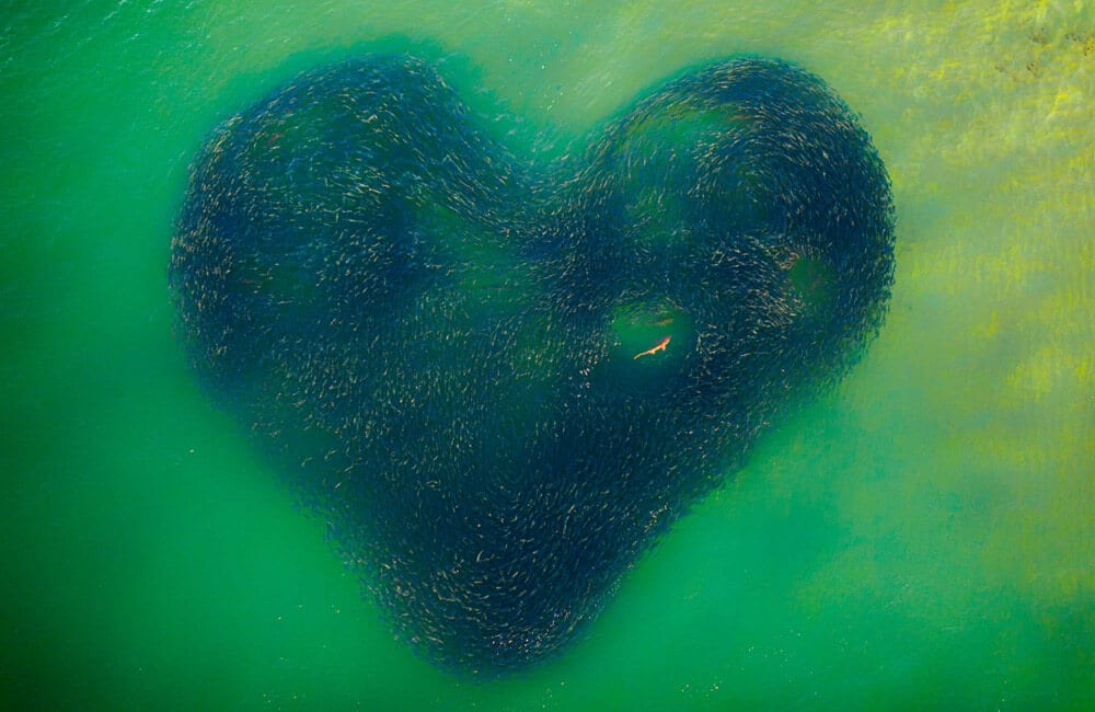 Love Heart of Nature © Jim Picôt / droneawards.photo