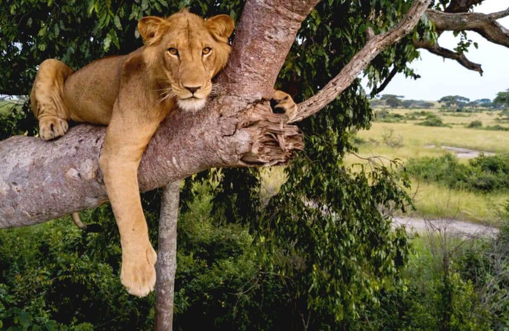Tree Lion @Guardian / Twitter.com