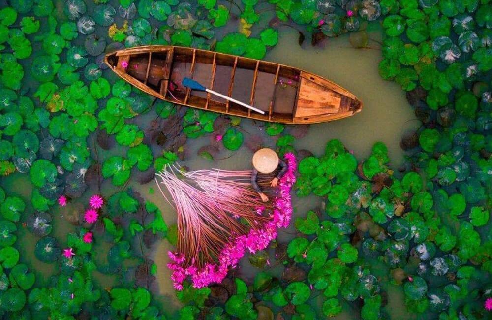 Water Lily @ u / Namesfud / Reddit.com