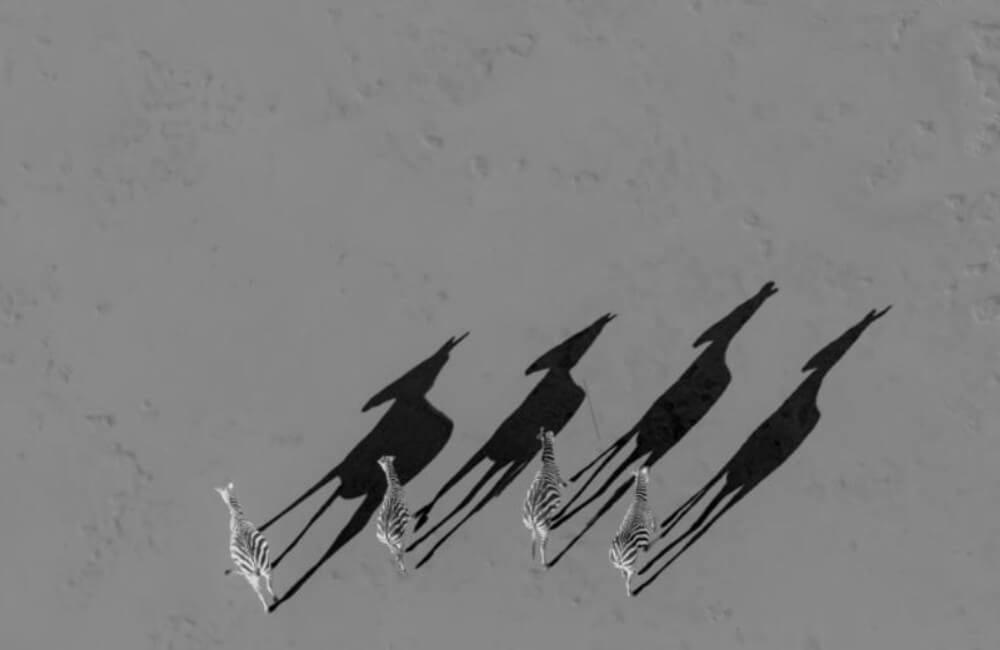 Followed by shadows © HAIQUAN XIANG / Instagram.com