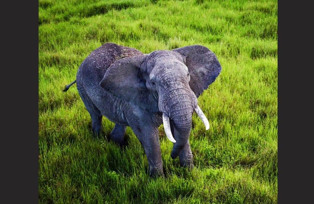 Hello Mr. Elephant @ferdigrapher / Instagram.com