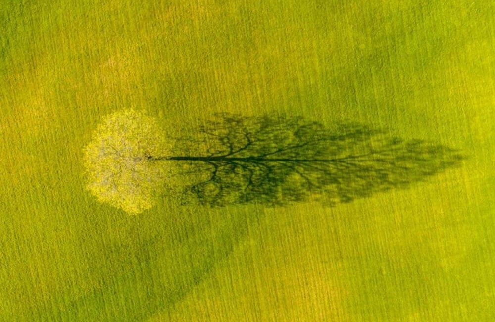 Spring Maple Tree Shadow PHOTO: © CALEB KENNA / Instagram.com