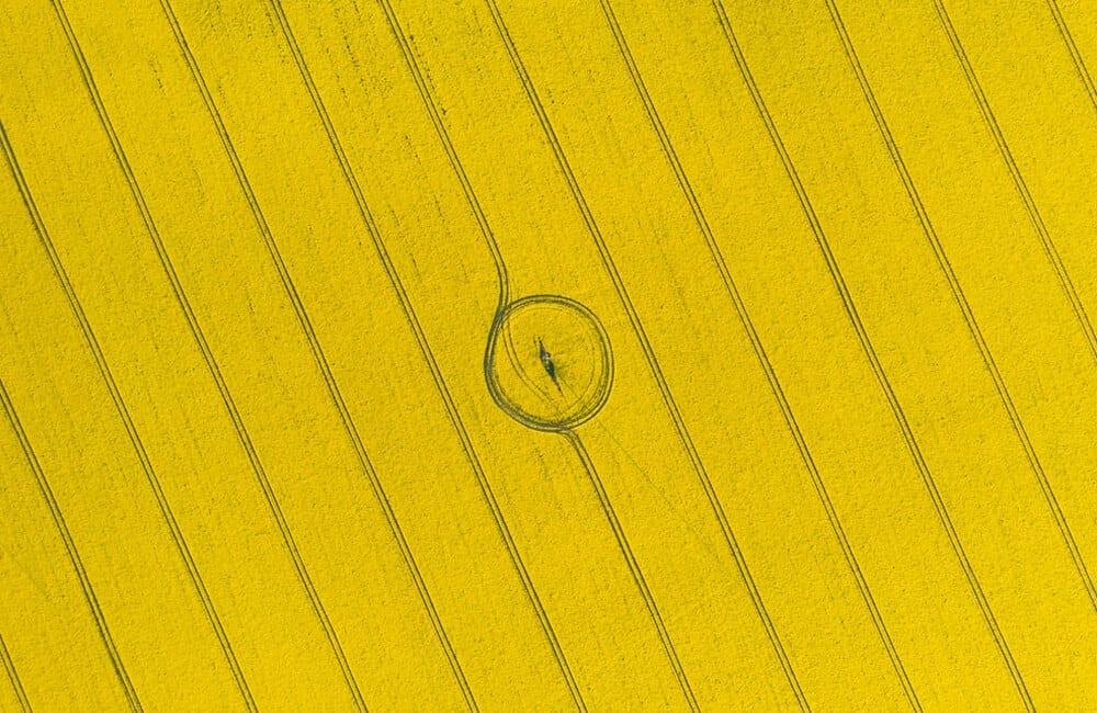 Yellow Field © Smit / Shutterstock.com