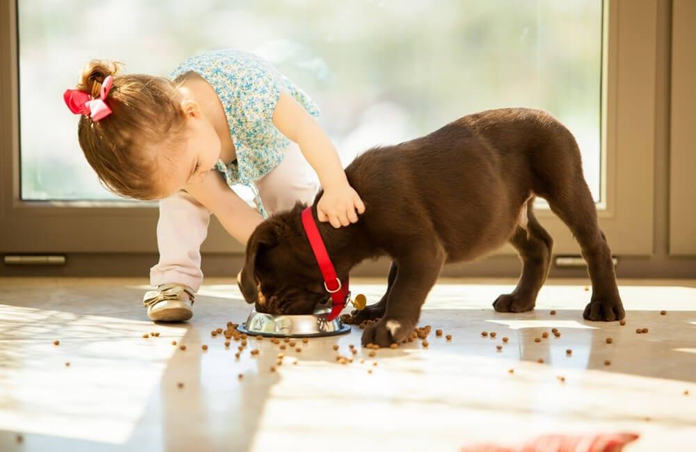 Pet food © antoniodiaz / Shutterstock.com