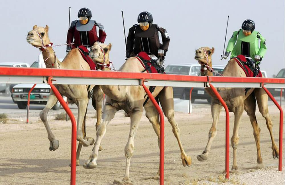 Robotic Camel Racers @flowersyadhi / Pinterest.com