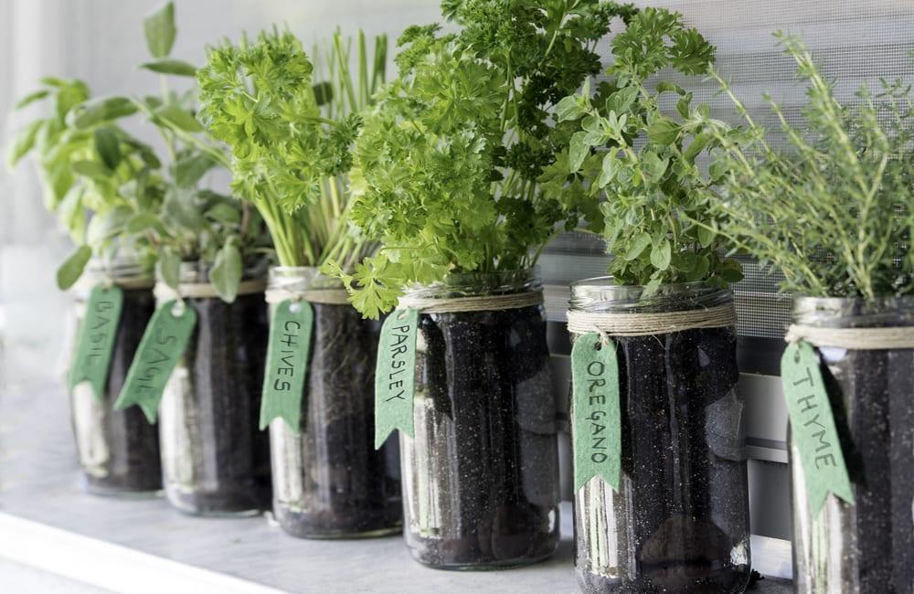 Mason Jars Into Herb Garden © ktkusmtku / Shutterstock.com