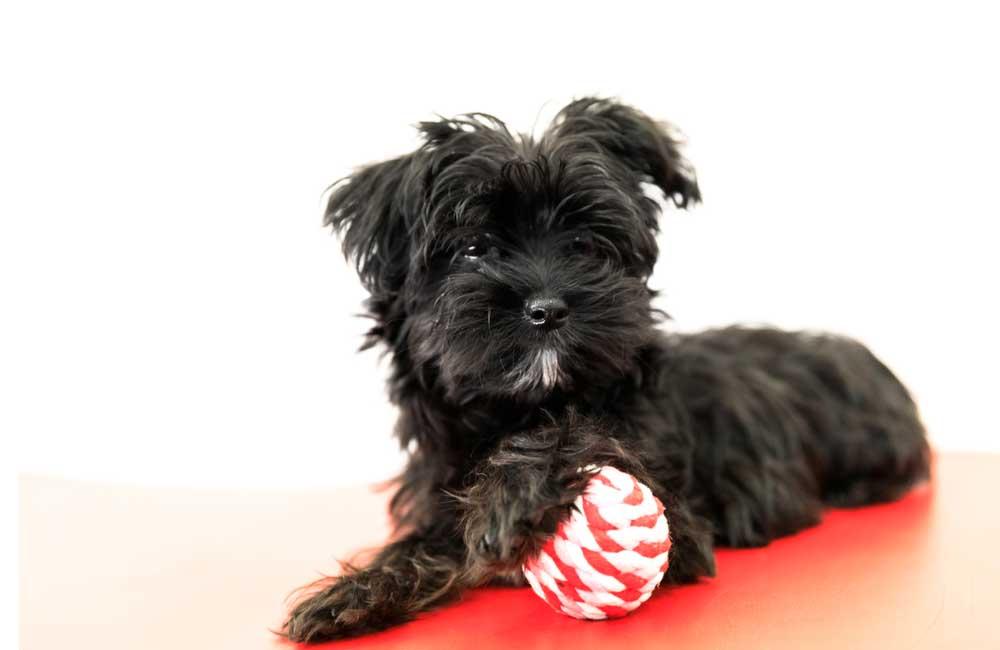 Yorktese © Benny Marty / Shutterstock.com