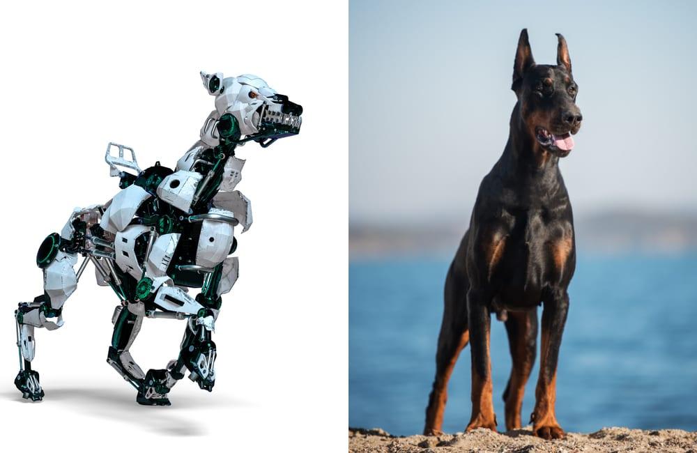 Robot Dog - Doberman @DM7 / Shutterstock.com - @Alexandra Morrison Photo / Shutterstock.com