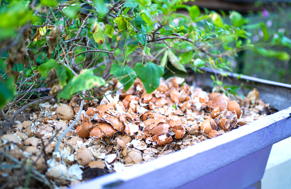 Eggshell Fertilizer @Wachiwit / Shutterstock.com