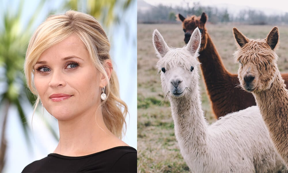 Reese Witherspoon @Denis Makarenko / Shutterstock.com | Alpacas @Canna Obscura / Shutterstock.com