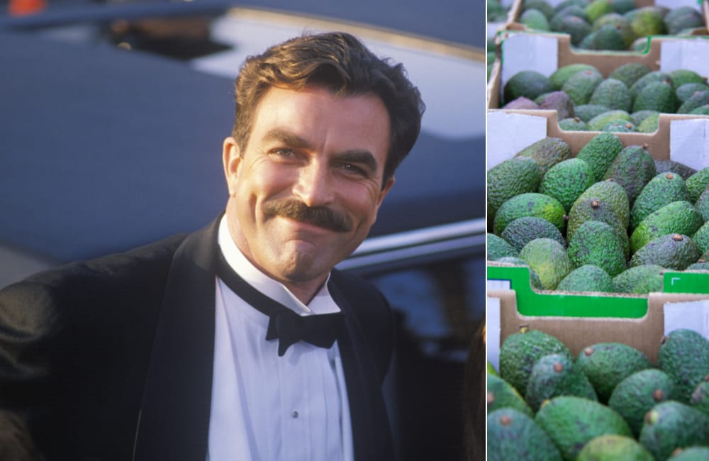 Tom Selleck @Joseph Sohm and Avocados @Roman Rvachov / Shutterstock.com